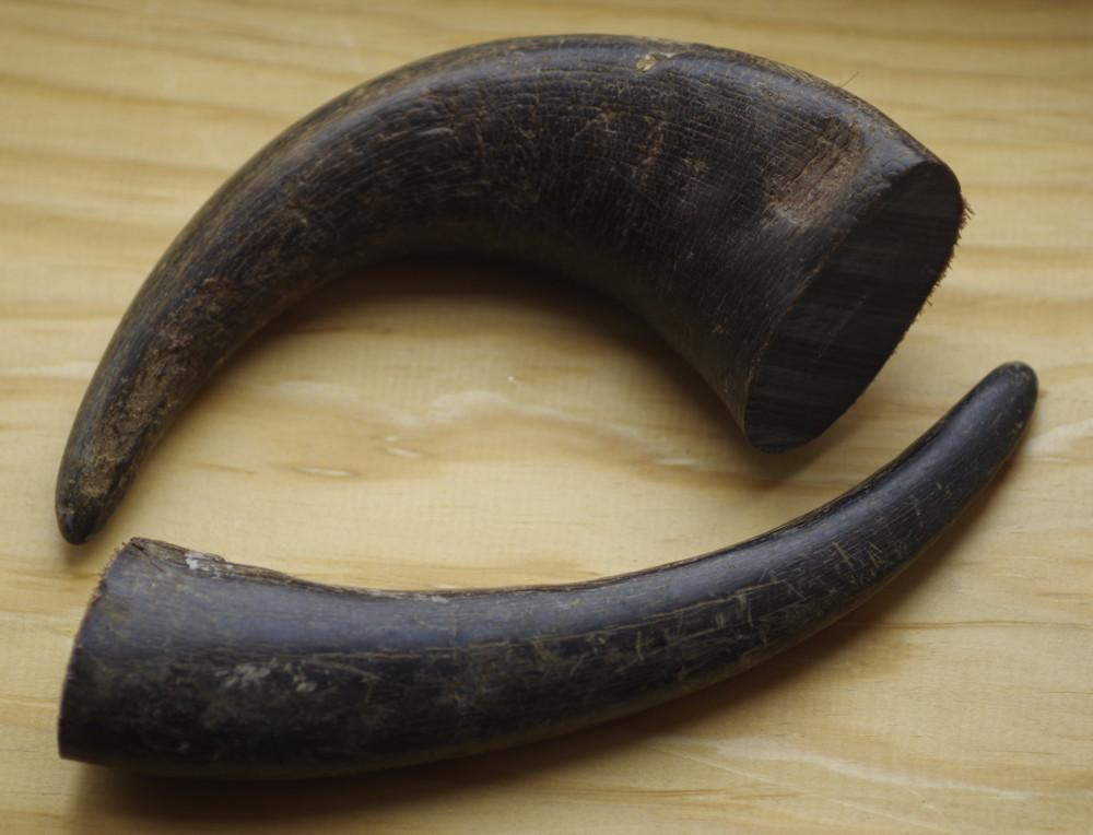 Buffalo Horn Points.